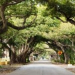 Coral Gables Real Estate Market Review 2015